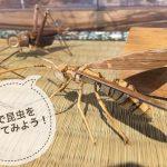 【ワークショップ】竹で昆虫を作ってみようについて。