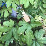 【ワークショップ】竹で昆虫をつくってみよう!